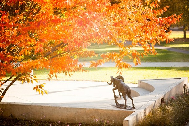 DVU ram fall picture